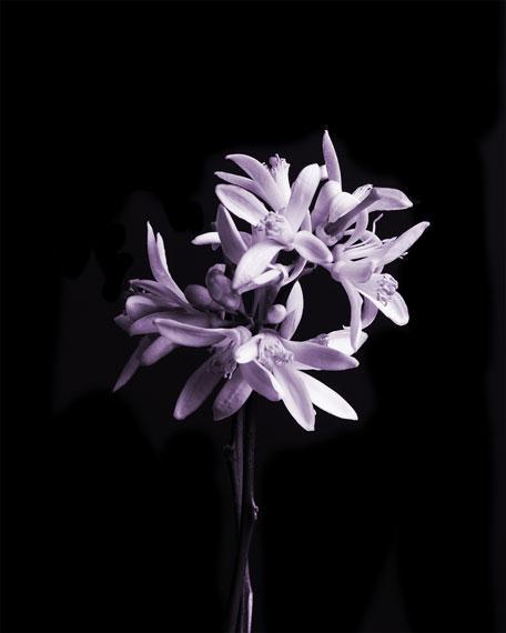 Celestial Jasmine Eau de Parfum, 100 mL