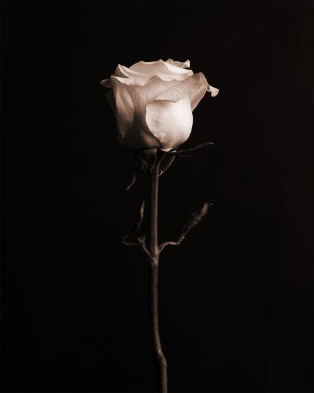 Thorns Rose Eau de Parfum, 100 mL