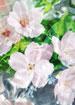 Aqua Allegoria Flora Cherrysia Eau de Toilette Spray, 4.2 oz./ 125 mL