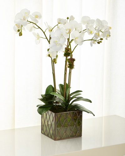 Phalaenopsis Orchid in Brass and Glass Cube