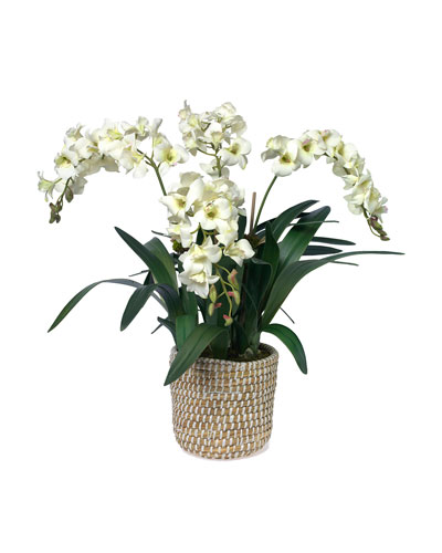 White Dendrobium Orchid in Woven Basket