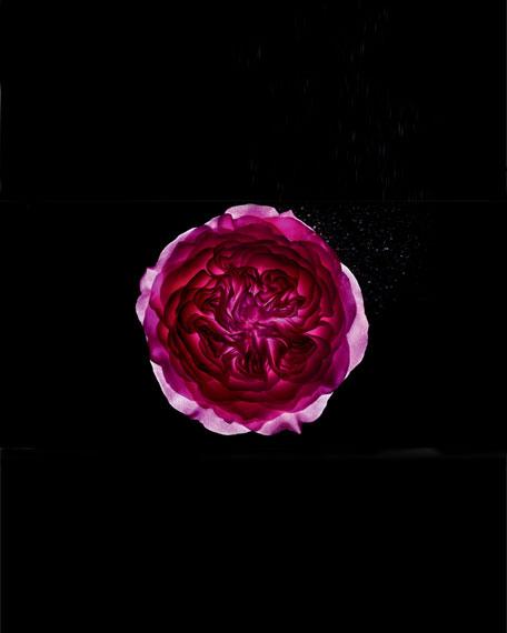 Rose Alexandrie Eau de Toilette, 250 mL