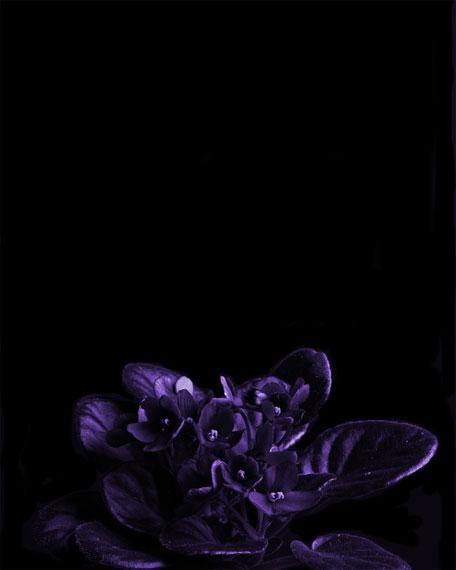 Fragile Violet Eau de Parfum, 100 mL