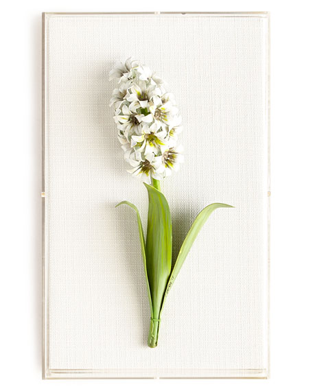 Original Painted Hyacinth Study