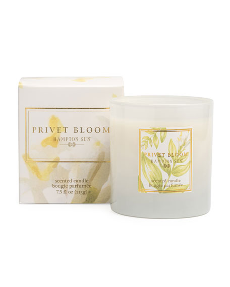 Privet Bloom Scented Candle, 7.5 oz./ 215 g