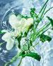 Aqua Allegoria Herba Fresca Eau de Toilette, 4.2 oz./ 125 mL